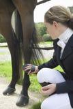 Girl Grooming Horse's Leg Stock Photos
