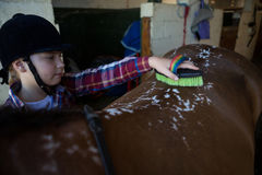 Girl grooming the horse. In the stable Stock Images