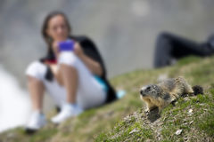 Girl after a ground hog marmot Stock Photography