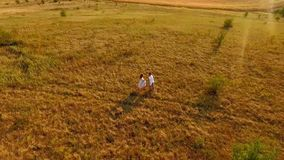 Happy couple having fun meadow. loving couple enjoys life on the nature in the field. Aerofutazh. View from above stock video footage