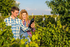 The girl and guy in the vineyard. The girl and the guy in the vineyard drink red wine Stock Image