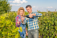 The girl and guy in the vineyard. The girl and the guy in the vineyard drink red wine Royalty Free Stock Photo