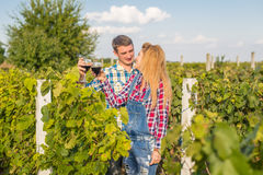 The girl and guy in the vineyard. The girl and the guy in the vineyard drink red wine Stock Photos