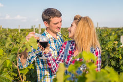 The girl and guy in the vineyard. The girl and the guy in the vineyard drink red wine Stock Photo