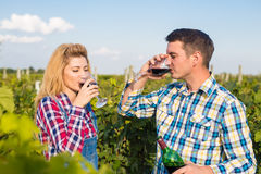 The girl and guy in the vineyard. The girl and the guy in the vineyard drink red wine Stock Photography