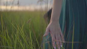 Girl is a hand through the grass stock footage