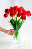 Girl hand hold red tulips bouquet in glass vase on wood table Stock Photography