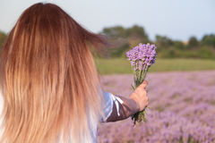 Girl hand holding a bouquet of lavender in lavender field. Girl holding a bouquet of fresh lavender in lavender field Royalty Free Stock Photos