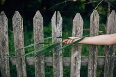 Girl hand holding green leaf at wooden fence with metal wire and grass. Environmental concept. Woman posing with cane branch in. Summer countryside in evening royalty free stock images