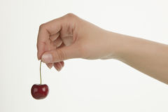 Girl hand holding ripe cherry. Female hand holding ripe cherry on white background Stock Photography