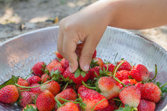 Girl hand keeping strawberry Royalty Free Stock Photos