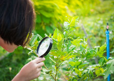 Girl hand looking for insect. Girl looking for insect in garden stock images