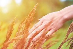 Girl hand stroking wild plants. The concept of unity with nature, purity of life Royalty Free Stock Image