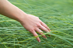 Girl hand stroking wild plants. The concept of unity with nature, purity of life Royalty Free Stock Photography