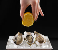 Girl hand, three oyster shell with lemon juice Stock Images
