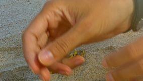 Girl Hands Dig up Gold Bitcoins Heap from Sand Macro. Macro girl hands dig up golden bitcoin real models heap from hole in ocean beach sand in shady and sunny stock video footage