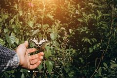 Girl hands and flying butterfly against green spring background. royalty free stock photography