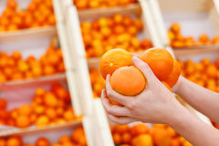 Girl hands hold oranges in large shop Stock Images
