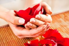 Girl hands holding red rose petals and beige natural nails color stock image