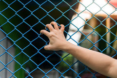 Girl hands on the wire fence Stock Photos