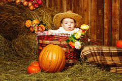 Girl and harvest pumpkins Stock Photography