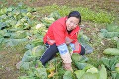 Girl harvest vegetable Royalty Free Stock Photo