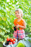Girl with harvest vegetables. In the garden Royalty Free Stock Image