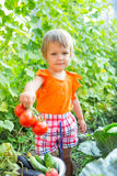 Girl with harvest vegetables. In the garden Stock Photography