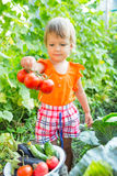 Girl with harvest vegetables. In the garden Stock Image