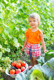 Girl with harvest vegetables. In the garden Stock Images