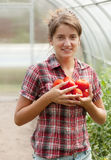 Girl with  harvested tomato Royalty Free Stock Photo