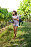 Girl harvesting grapes under sunset light Stock Photo