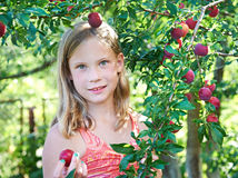 Girl harvests plums Royalty Free Stock Photography