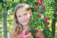 Girl harvests plums Stock Images