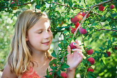 Girl harvests plums Royalty Free Stock Photos