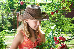 Girl in hat harvests plums Royalty Free Stock Photos