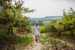 The girl in hat and rain boots walks with sweet apple in the apple orchard stock photography