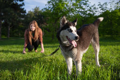 The girl is having fun with her husky dog Royalty Free Stock Images