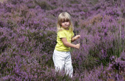 Girl in heather field 2 Royalty Free Stock Photos