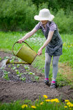 Girl helps pours garden. Girl hat pours a vegetable garden Royalty Free Stock Image