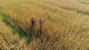 The girl and her child are walking through a wheat field. Shooting from a drone. Leisure and entertainment in the open. The girl and her child are walking stock video footage