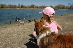 Girl and her Dog. A day at the duck pond. A girl feeds the duck with her sheltie dog looking on royalty free stock photos