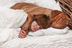 Girl and her dog in the bed. Girl and her dog comfortably sleeping in the bed royalty free stock image