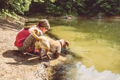 Girl and her dog by the lake. Catching tadpole Stock Image