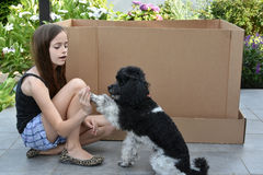 Girl and her dog. Girl trains her little harlequin poodle io give five Royalty Free Stock Image