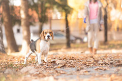 A girl and her dog walking in a park Stock Photo