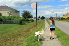 The girl and her dog. A young woman goes for a walk with a dog stock photo
