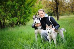 A girl and her dogs husky walking in a park. stock image