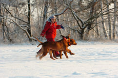 Girl with her dogs in snow. Happy girl with her dogs running through the snow. Its a very cold day in winter outside with two Rhodesian Ridgeback hound dogs Stock Photo