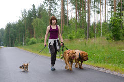 A girl and her dogs walking in a summer forest royalty free stock photography